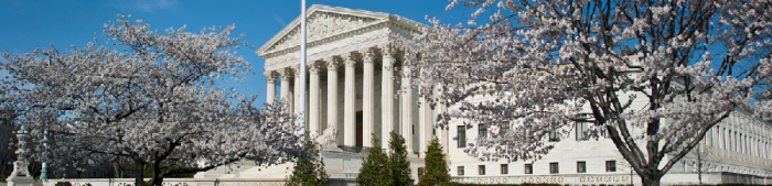 scotus_cherryblossoms_image